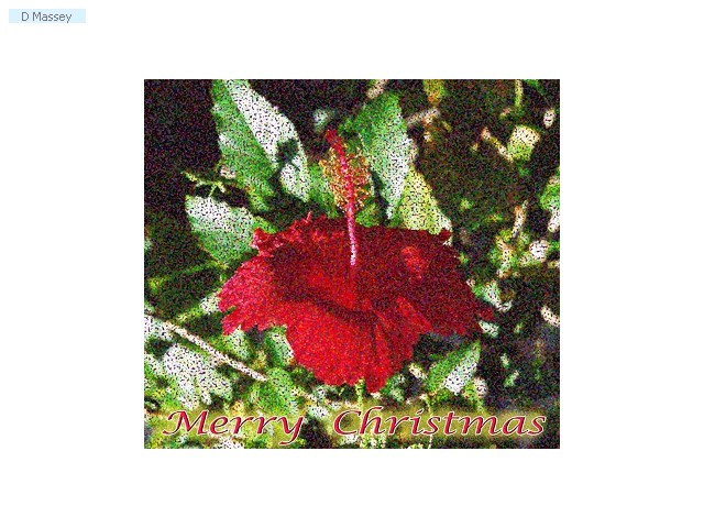 Chistmas Hibiscus